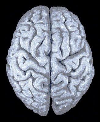 cerebro_humano - copia